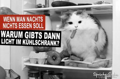Lustige Sprüche Essen und abnehmen - Katze im Kühlschrank