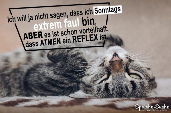 Lustige Sprüche - Sonntags extrem faul sein - müde Katze