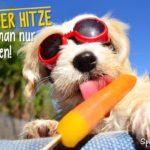 Sommer Sprüche - Hund mit roter Sonnenbrille schleckt bei blauen Himmel genüßlich ein Wassereis