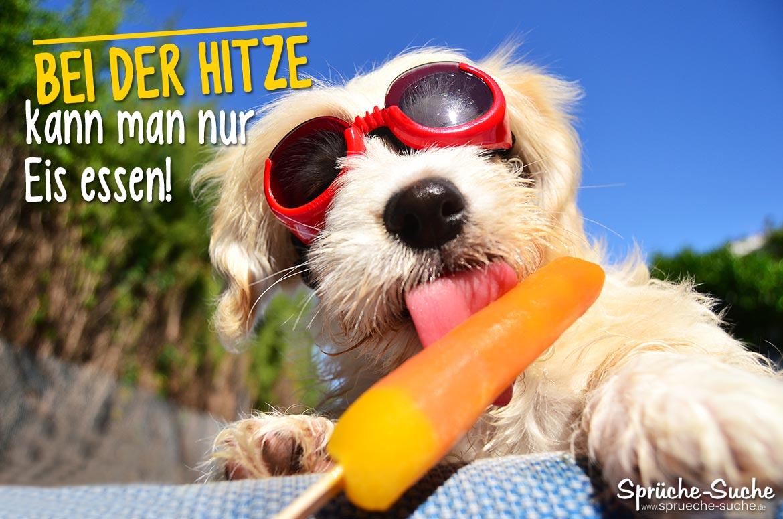 Sommer Sprüche   Hund mit Eis   Sprüche Suche