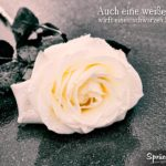 Spruch zum Nachdenken - weiße Rose