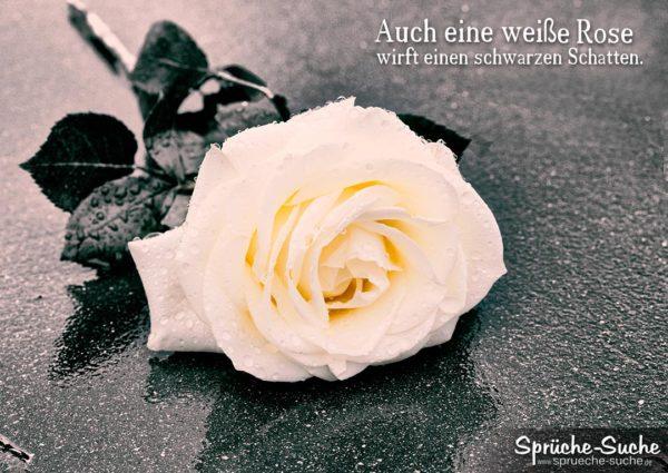sprüche über rosen Sprüche zum Nachdenken   Weiße Rose sprüche über rosen