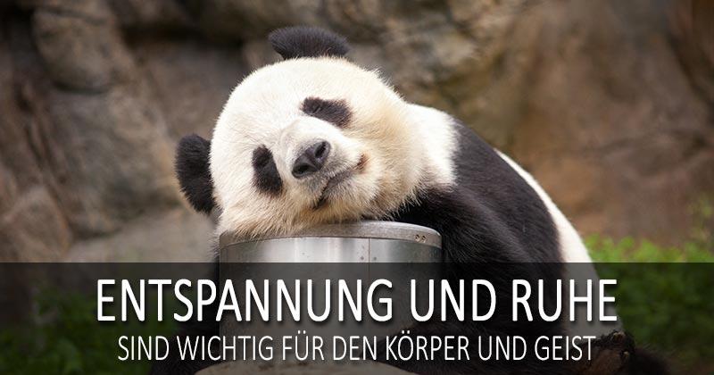 Pandabär - Entspannung und Ruhe sind wichtig für den Körper und Geist