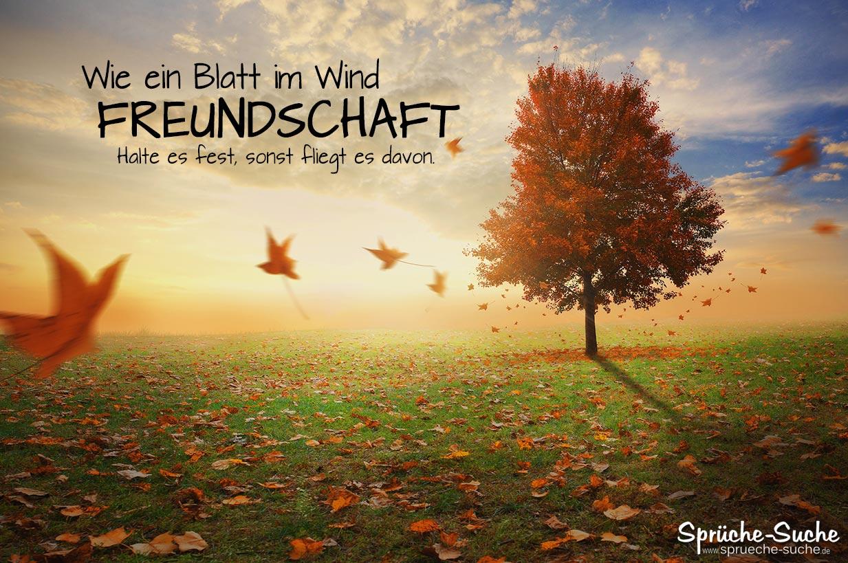 Freundschaft   Spruch zum Nachdenken   Blatt im Wind   Sprüche Suche