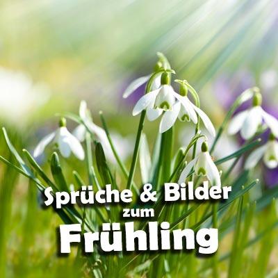 Schöne Frühling-Sprüche - Schneeglöckchen