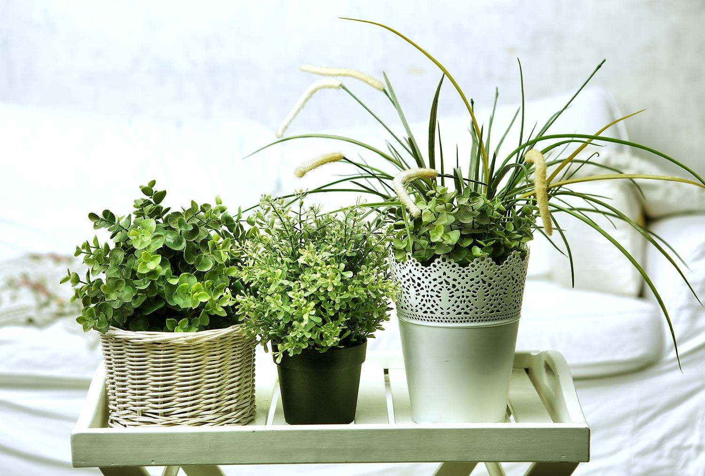 sch ne zimmerpflanzen spr che suche. Black Bedroom Furniture Sets. Home Design Ideas