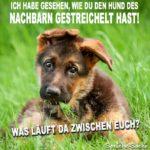 Hund des Nachbarn gestreichelt - Lustige Bilder und Sprüche