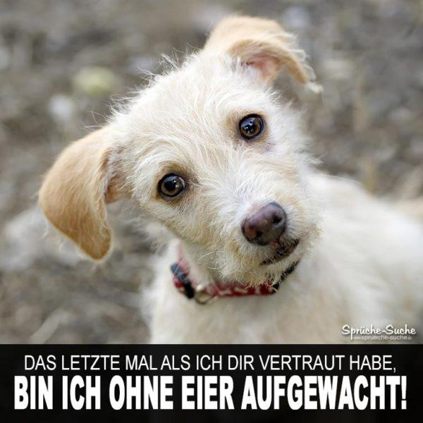 Ohne Eier Aufgewacht Witzige Sprüche über Hunde