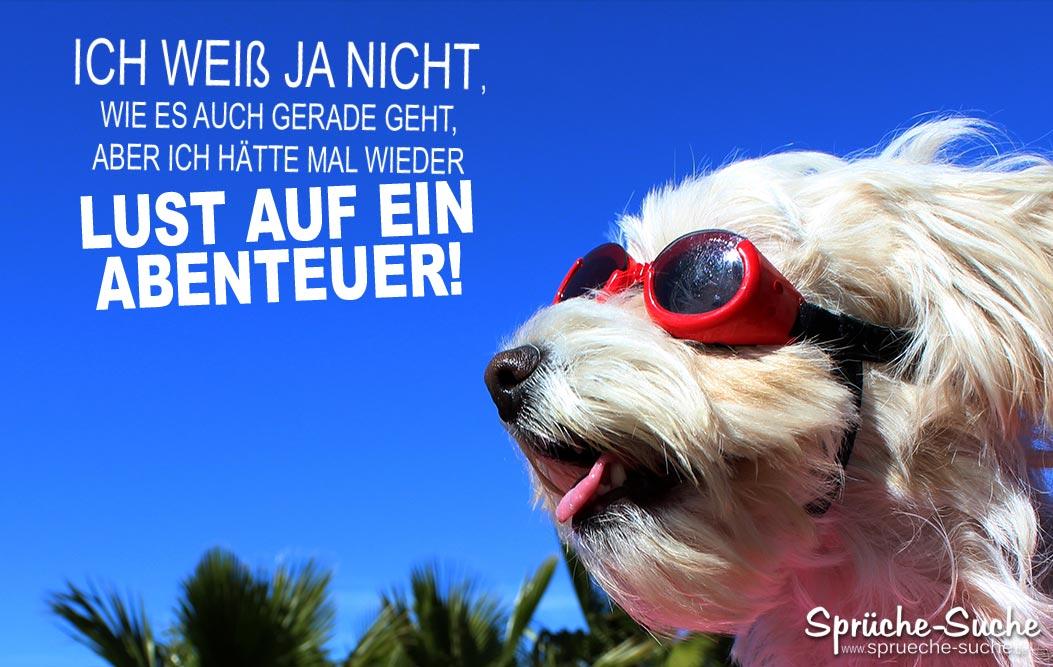 Lust Auf Ein Abenteuer Spruch Mit Hund Sprüche Suche