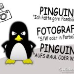Pinguin Witz Fotograf