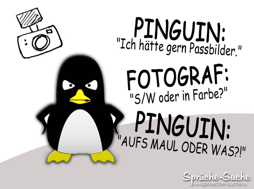 Pinguin Witz Fotograf Sprüche Suche