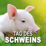 Tag des Schweins