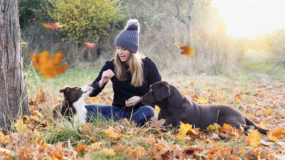 Frau spielt mit ihren beiden Hunden
