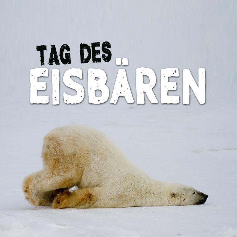 Tag des Eisbären