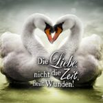 Zwei Schwäne in Herzform - Die Liebe heilt Wunden