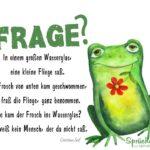 Frosch, Fliege und Wasserglas - Gedicht
