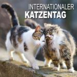 Internationaler Katzentag