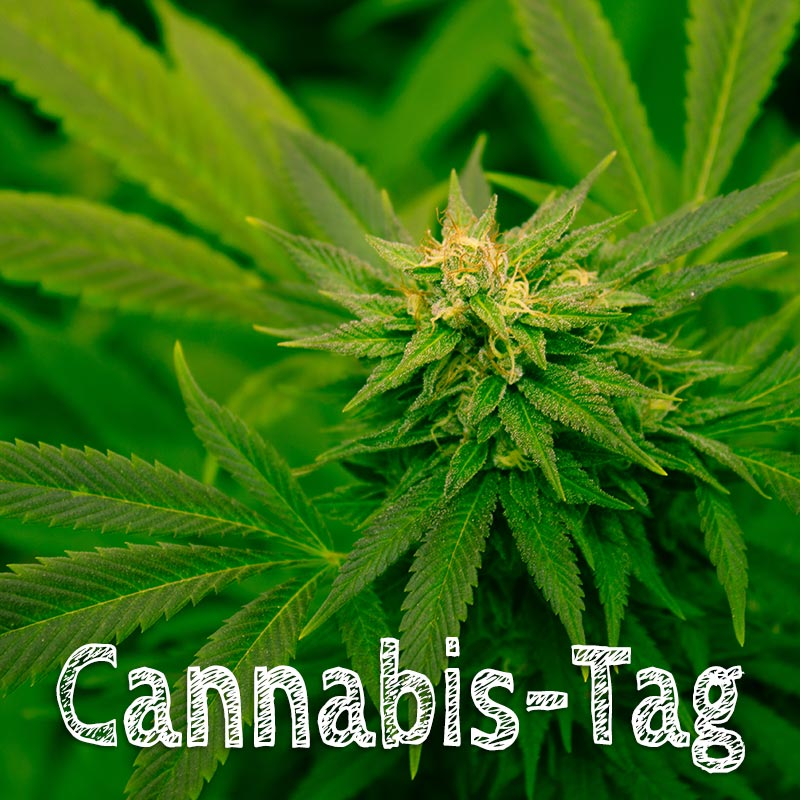 Cannabis-Tag