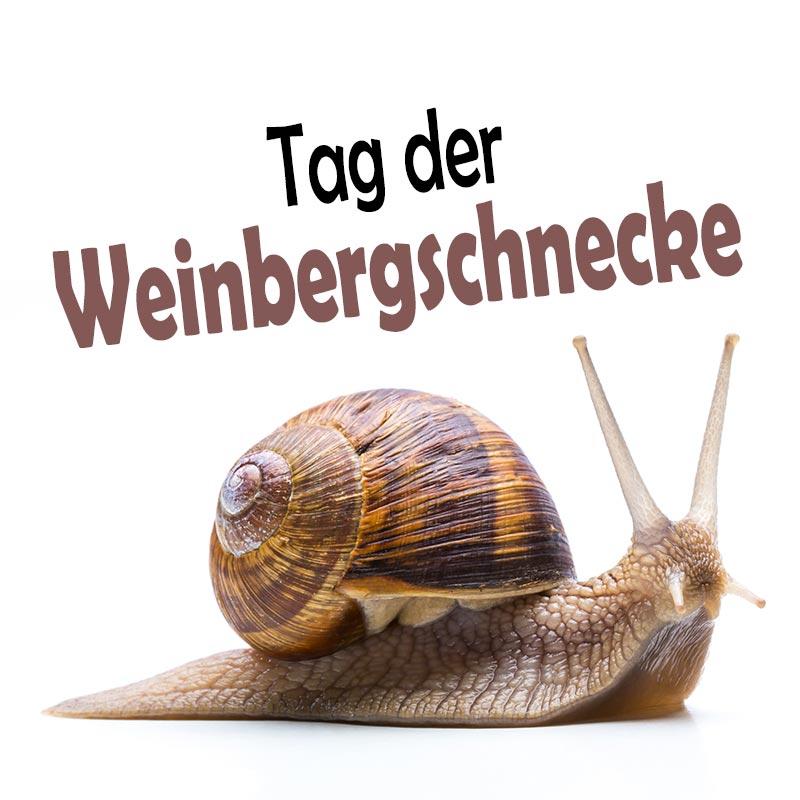 Tag der Weinbergschnecke