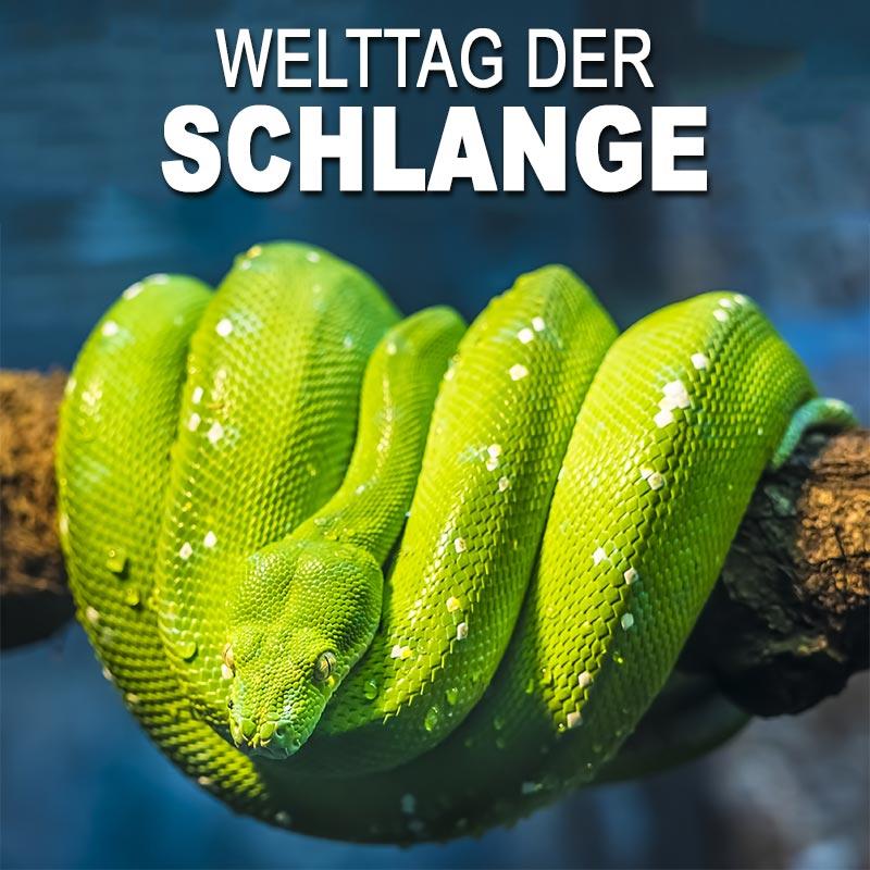 Welttag der Schlange