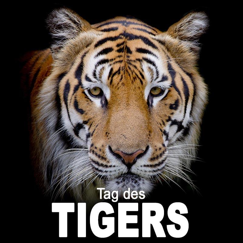 Tag Des Tigers Sprüche Suche