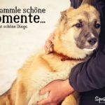Schöne Momente sammeln - Schöner Spruch zum Nachdenken über das Leben - Mann mit Hund