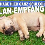 ELAN-Empfang - Lustiger Spruch mit schlafendem Hund