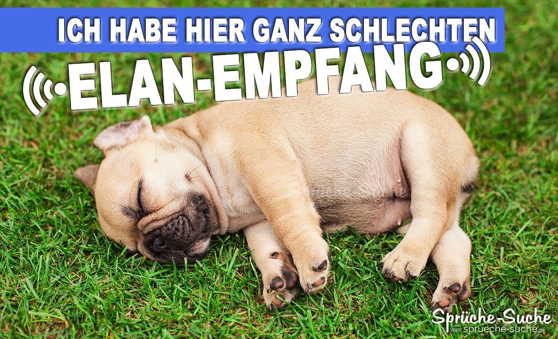 Elan Empfang Lustiger Spruch Mit Schlafendem Hund Sprüche Suche