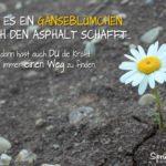 Gänseblümchen Asphalt - Motivation fürs Leben Spruch