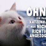 Katzenhaare auf Kleidung - Lustiger Spruch mit weißer Katze