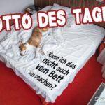Hund im Bett - Motto des Tages Spruch
