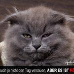 Montag - Lustiger Spruch mit Katze