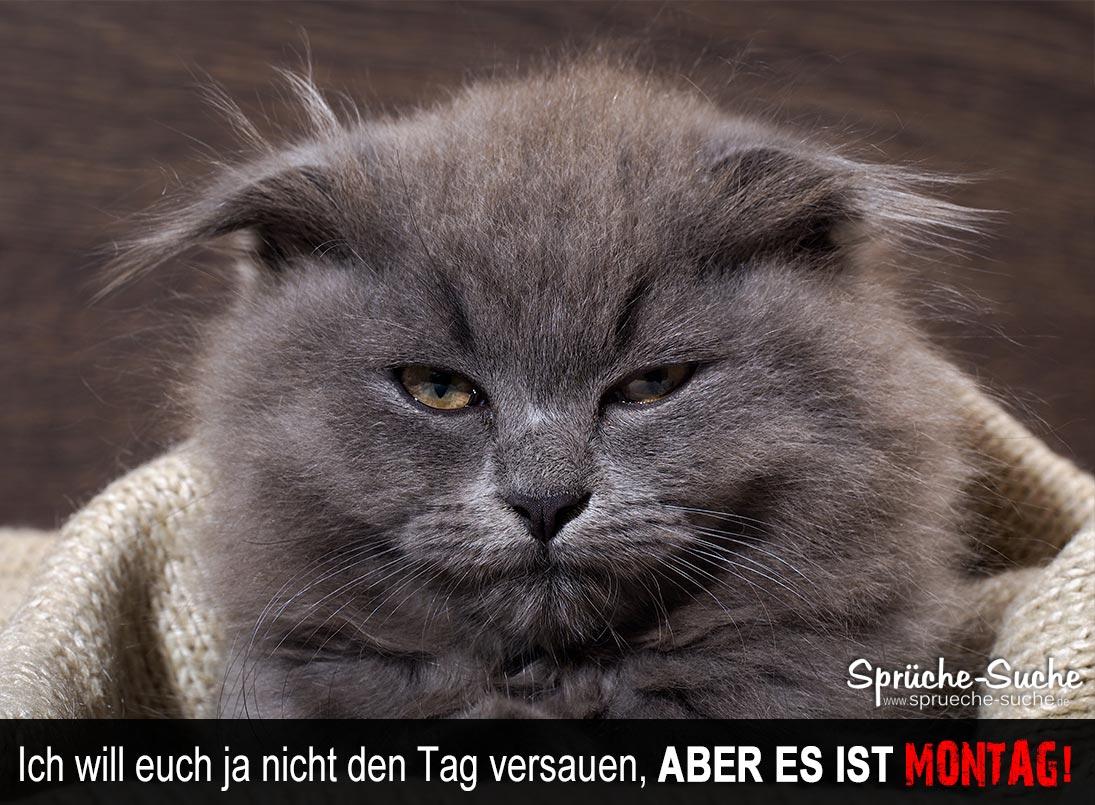 Lustiger Spruch Montag Mit Katze Spruche Suche