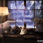 Ein Haus ohne Tiere ist wie ein Himmel ohne Sterne - Spruch mit Hund und Katze