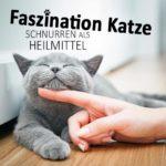 Faszination Katze - Schnurren als Heilmittel