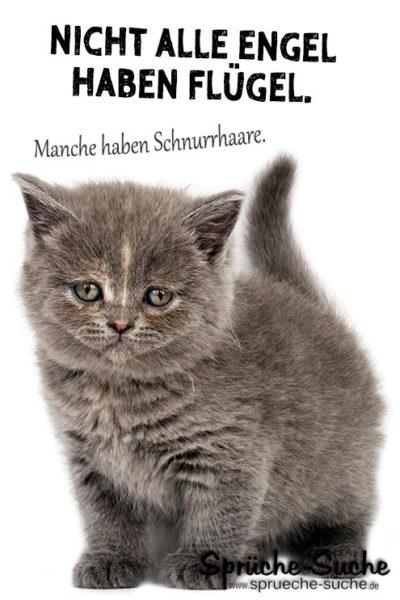 Schöne Sprüche über kleine Katzen