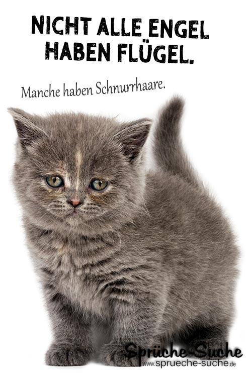Schöne Sprüche über kleine Katzen   Sprüche Suche