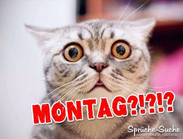 Montag Sprüche mit Katze