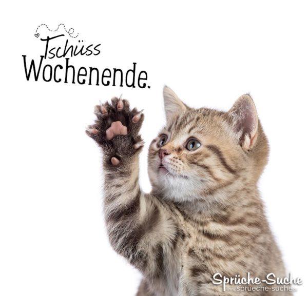 Tschüss Wochenende Katze winkt