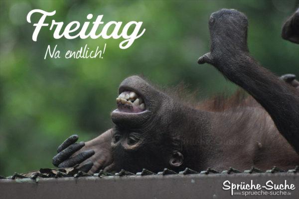Freitag Status Affe