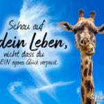 Glück Sprüche - Schau auf dein Leben mit Giraffe