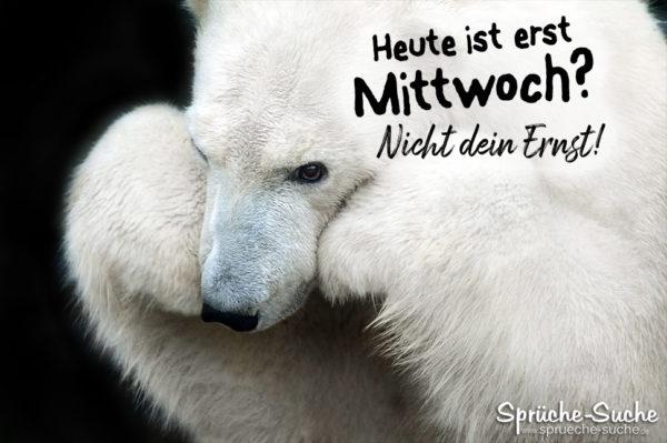 Heute ist erst Mittwoch - trauriger Eisbär