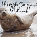 Schönen Mittwoch - Robbe am Strand lacht