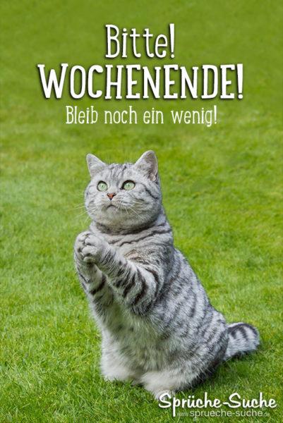 WOCHENENDE Spruch mit Katze
