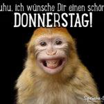 Wünsche zum Donnerstag mit Affe