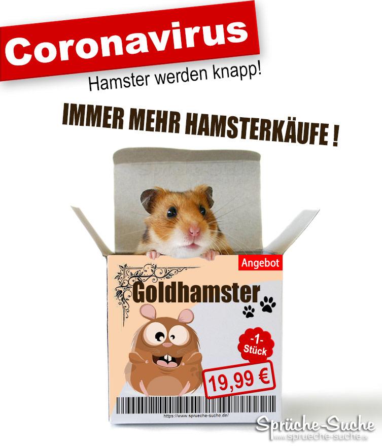 Bilder Hamsterkäufe