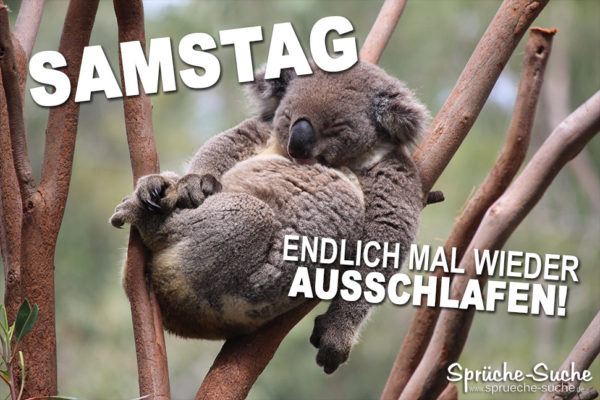 Samstag ausschlafen - Spruch mit Koala