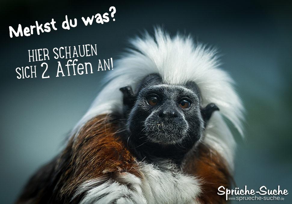 Spruch Affe lustig - Sprüche-Suche