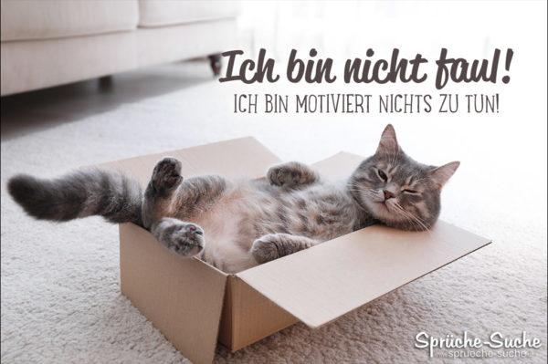 Spruch mit Katze - faul sein