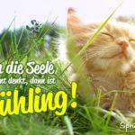 Niedliche Katze genießt die Sonne - Wenn die Seele wieder bunt denkt, dann ist Frühling!